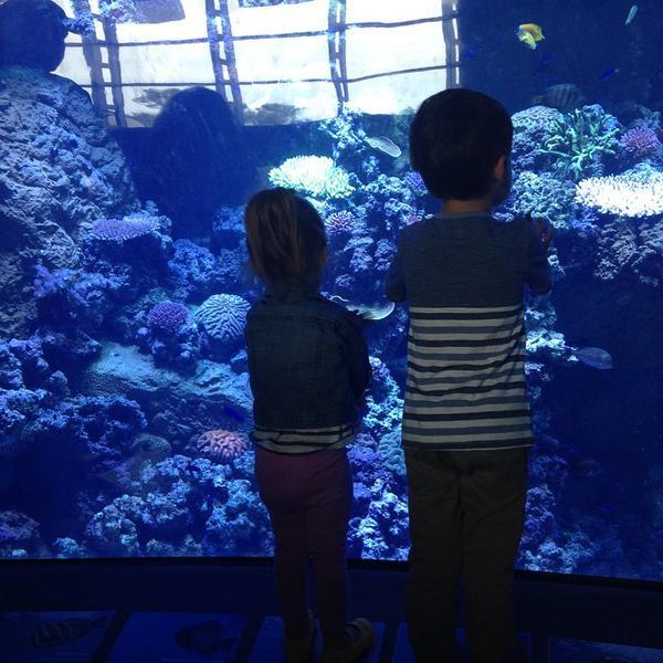Chidren aquarium